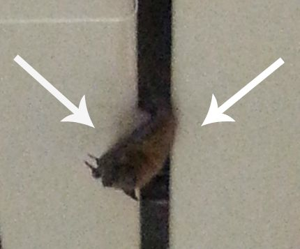 A bat in the workplace, part of the glamour of being a working mom!