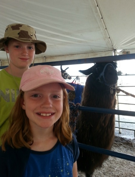 5 Things I'm Loving About Summer the 4-H fair!