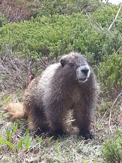 Seen and unseen on our family vacation Marmot