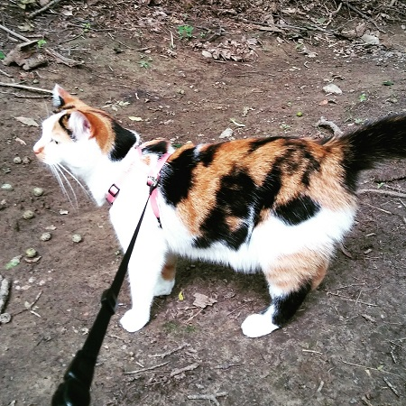 One of our simply summer highlights was taking our cat for a walk in the woods!