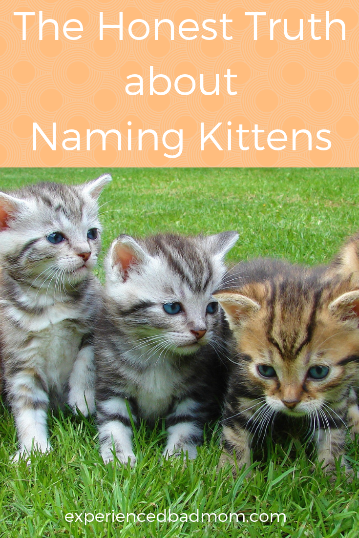 Naming kittens? Here's the honest and funny truth about how our family decided on our new cats' names.